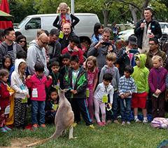 A Kangaroo Breaks Loose At Google