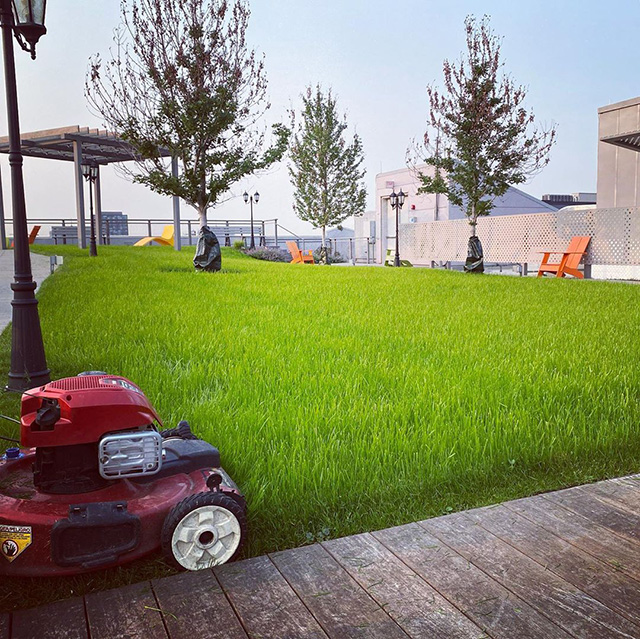 Mowing The Google Chicago Rooftop Lawn