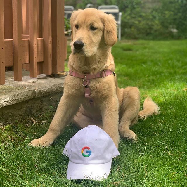 Nieuwe Doogler - Google Dog - Noogler