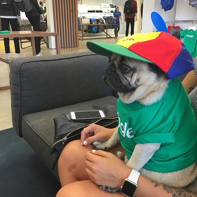 Google Noogler Dog
