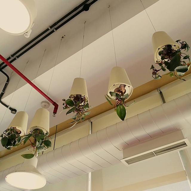 Upside Down Planters At Google