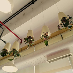 Upside Down Plants At Google