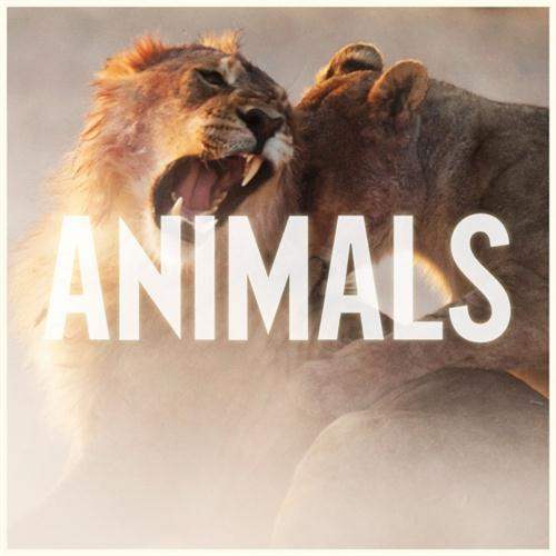 Maroon 5 Animals cover art
