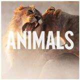 Animals sheet music by Maroon 5