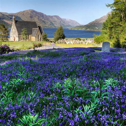 Traditional The Bluebells Of Scotland cover art
