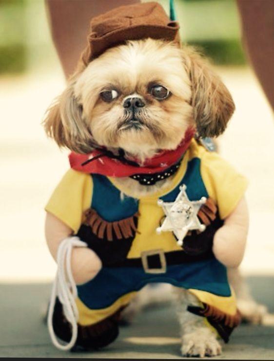 Cool Clothes Army Adorable Dog - 916bb087851913b8b81b822bb85417ca  HD_797891  .jpg