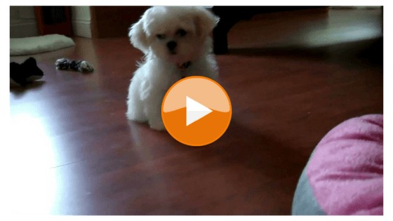 Happily At Home: Puppy's First Day