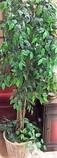 5Ft-Tall-Silk-Ficus-Tree_4762B.jpg