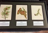 Framed-Art.---Pine-Spruce-Larch-Branches_4834A.jpg
