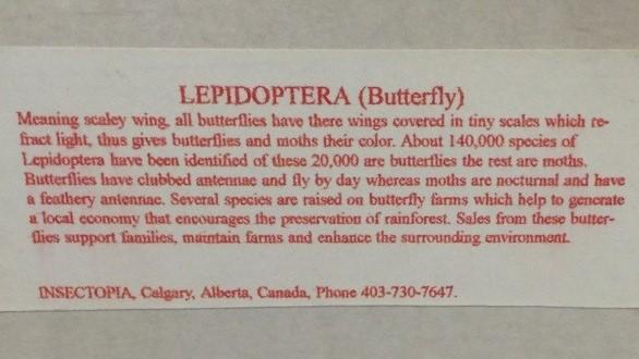 Framed-Butterflies-Real_6758B.jpg