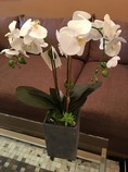 Silk-PlantTree_13569A.jpg