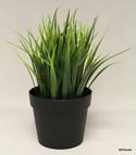 Silk-Plant_155474A.jpg