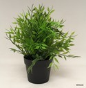 Silk-Plant_155475A.jpg