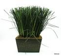 Silk-Plant_161476A.jpg