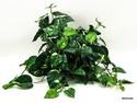 Silk-Plant_167472A.jpg