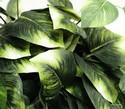 Silk-Plant_167694B.jpg