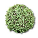 Polyvest-Vine-Grass-Ball_71635A.jpg
