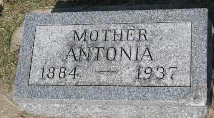 NEDVED, ANTONIA - Bon Homme County, South Dakota | ANTONIA NEDVED - South Dakota Gravestone Photos