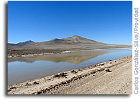 Rain Brings Death To Mars-like Atacama Desert