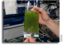 Algae In Space