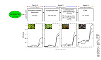 The Vegetation Red Edge Biosignature Through Time on Earth and Exoplanets