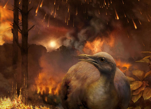 Ancestor of all living birds survived asteroid strike because it couldn't fly