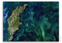Earth from Space: Baltic Blooms