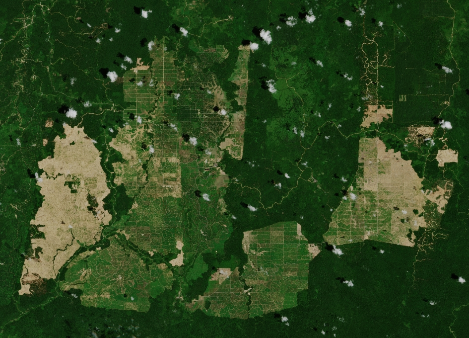 Earth from Space: Palm Oil Plantations, Borneo