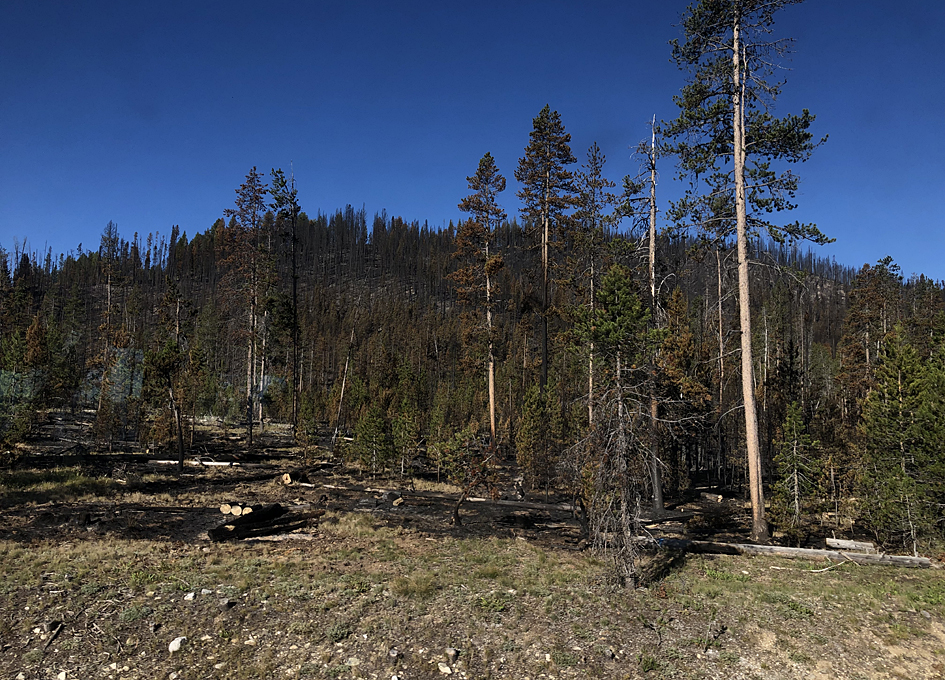 Satellite Data Record Shows Climate Change's Impact on Fires