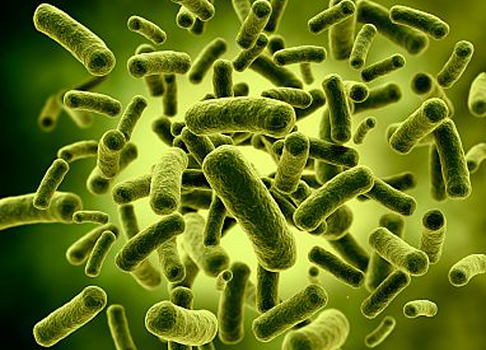 Spaceflight Consistently Affects The Gut Microbiome