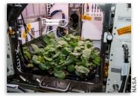 NASA Space Station On-Orbit Status 1 December 2020 - Cargo Resupply Preparations