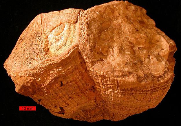 Million years ago days were half-hour shorter #40040