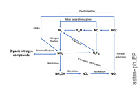 Assessment of Ammonia as a Biosignature Gas in Exoplanet Atmospheres
