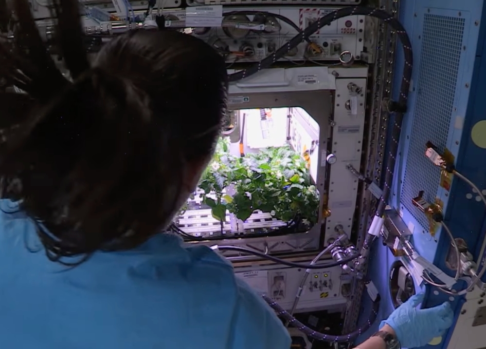 NASA Weekly ISS Space to Ground Report for 22 October, 2021 - Harvesting the First Peppers in Space