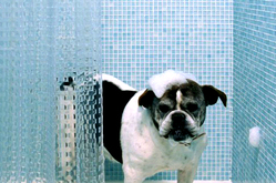 Pet Friendly Hotels Seattle - Hotel Max
