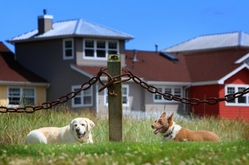 Pet Friendly Hotel - Port Ludlow, WA