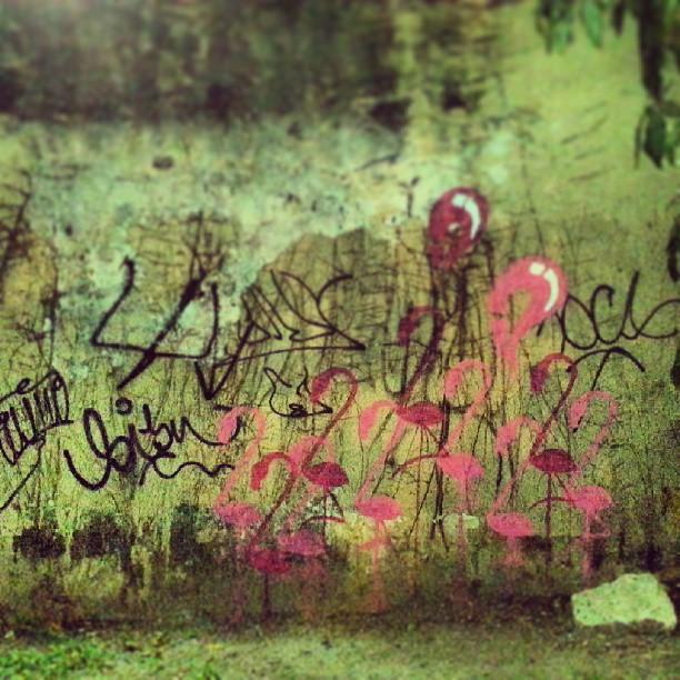 Jardim #flamingo #rafa #sabadodemanhacrew #graffiti #graffrio #flamenco #rosa #pink #grafite #botafogo