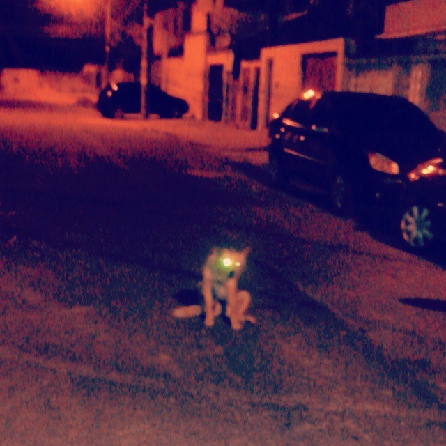 Cão Noturno de Cosmos, deita no meio da rua e ainda late like a boss pro carro que o fizer se mexer. #rio #rj #cosmos #riodejaneiro #cão #dog #street #urban #streetarteverywhere #streetart #streetphotography #streetstyle #streetartrio