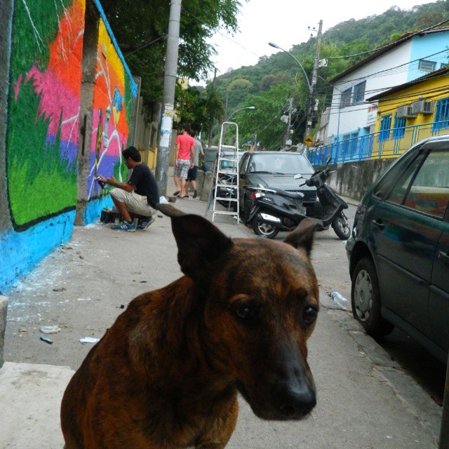 Dug na pose pra foto. #dug #cachorro #viralata #graffiti #spray #streetartrio