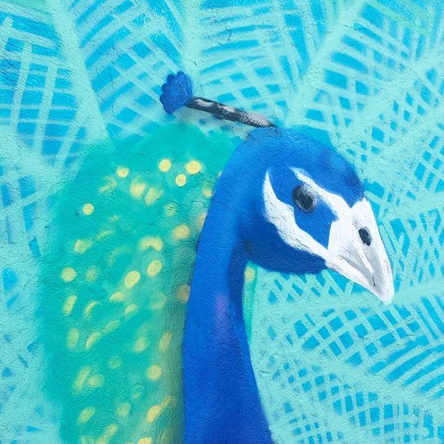 Depois de um dia de trabalho, um detalhe de um muro inacabado. Valeu @cazesawaya pelo espaço. #pavao #trapacrew #rafa #rafagraffiti #rafaelgeraldo #streetart #streetartrio #graff #graffiti #grafite #birds #bird #peacock #lapa #moc #meetingofcaze #colorgin #colorginarteurbana #mtn #mtn94 #montana #montanacans #montanacolors #characterdesign #character #tonoadorofarm #unidosdatijuca #tijuca