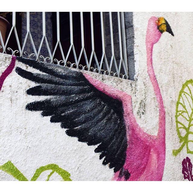 Hoje tem Casa Aberta na @coletivoca Casa Amarela. O flamingo fica meio escondido, mas tá lá! #casaamarela #rafa #rafagraffiti #rafaelgeraldo #trapacrew #flamingo #flamingos #pinkflamingo #flamenco #arte #art #streetart #streetartrio #graff #graffiti #grafite #birds #bird #tijuca #tijukistan #tijukistão