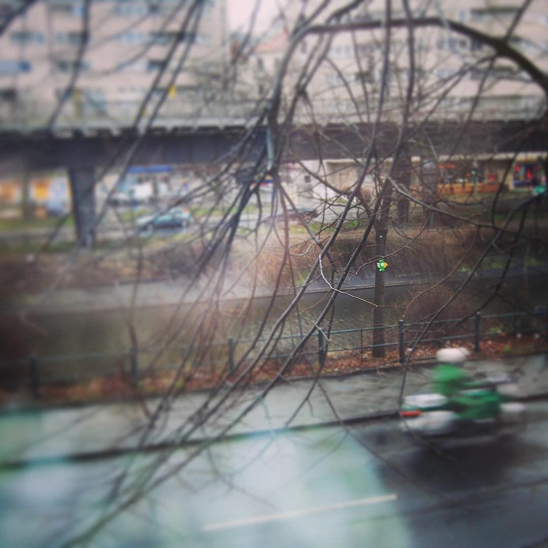 bird, Berlin  #noboarders #refugees #immigrant #playa #beach #art #streetart #graffiti #photodoc #villas #rodrigovillas #trees #ingf #ipanema #onelove #respect #passarinho #lovebird #bird #canarinho #streetphoto #characterart #nature #streetartrio #coqueirao #posto9 #summer #palmtrees #coconut #surf