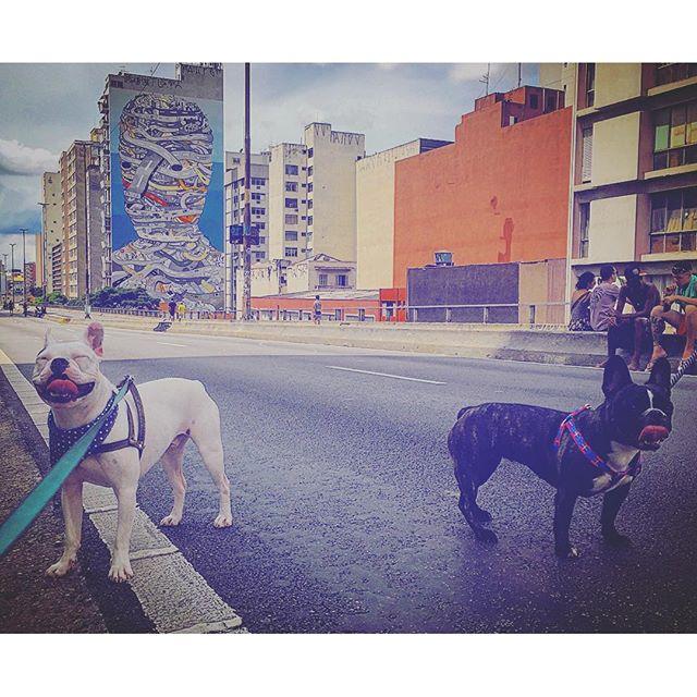 Rolê do Pierre e da Piggy! Rodinha nas patas. #minhocao #pierrefrenchie #sp #domingo #sundayfunday #streetart #streetartsp #streetartphotography #petlovers #dogsofinstagram