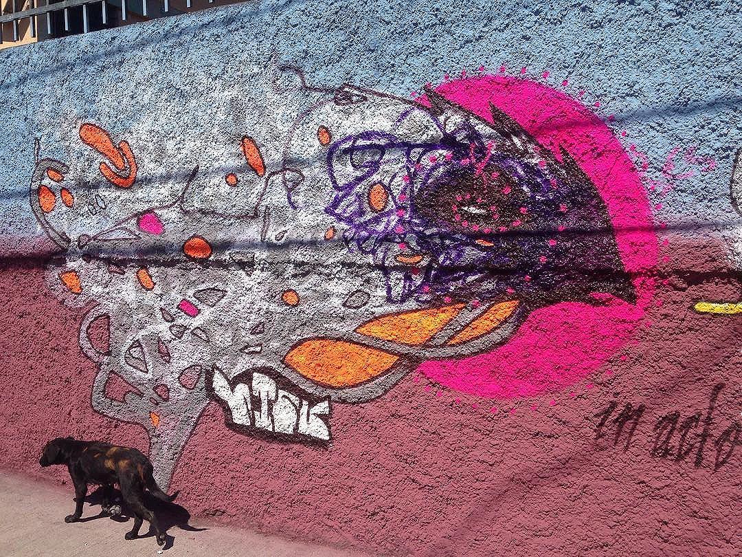 #graffitixlixo #streetartsp #phoenix #urbanart #contemporaryart
