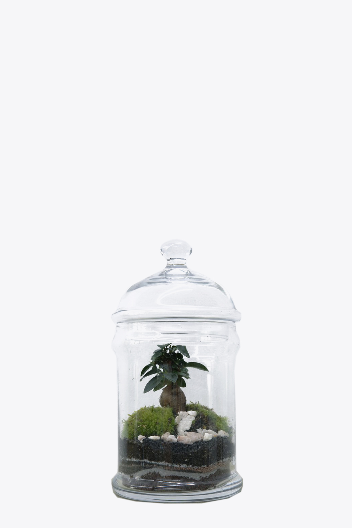 DOME VASE GREEN FACTORY | 30000035 | 2 DOME.