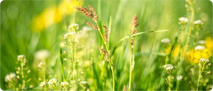 outdoor grasses and weeds