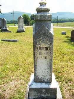 REED, FLORENCE - Coffee County, Tennessee | FLORENCE REED - Tennessee Gravestone Photos