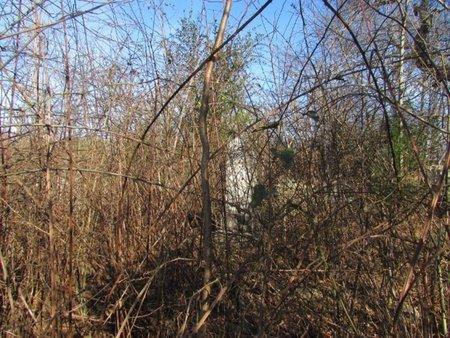 *EAGIN CEMETERY,  - Giles County, Tennessee |  *EAGIN CEMETERY - Tennessee Gravestone Photos