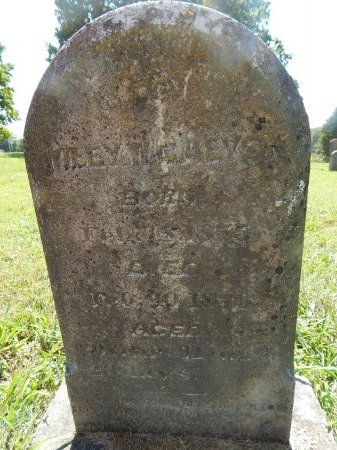 GALYON, WILEY W - Jefferson County, Tennessee | WILEY W GALYON - Tennessee Gravestone Photos