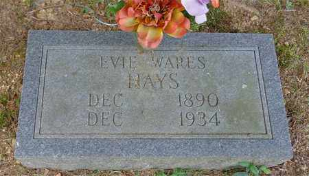 HAYS, EVIE WARES - Lawrence County, Tennessee | EVIE WARES HAYS - Tennessee Gravestone Photos